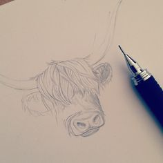 Sketch of Janice our Highland Cow, in the works for a new stationary collection