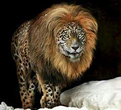 rare animals | Super rare panion. Beautiful. | Animals