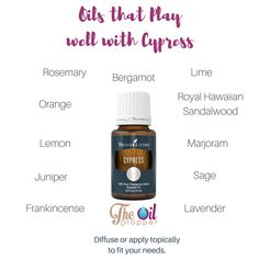 What to do with Cypress? Try mixing it with one of these oils to create a unique blend just for you. www.theoildropper.com to learn more about cypress