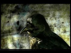Mind of the Raven - Crows Documentary - YouTube