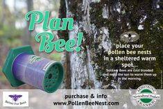 Pollen Bee Nests - The Bee's Gallery Tips for using bee nests in your garden to help protect and nurture your local solitary pollen bees
