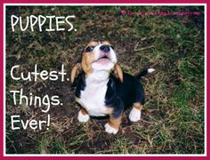 Pooch Smooches: #BtC4A: How To Get Your Puppy-Fix Without the Chewed Shoes