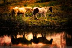 Horse Reflections by Daniel Bust on 500px