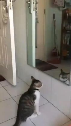 Funny Animal Memes, Funny Cat Videos, Funny Animal Pictures, Cute Funny Animals, Cat Memes, Cute Baby Animals, Funny Cute, Hilarious, Funny Photos