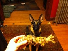 dried yam rings on a rope - a DIY dog toy