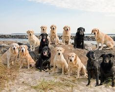 I'd like to shake the hand of the person that got all these labs ready for this picture.  How cool!!!