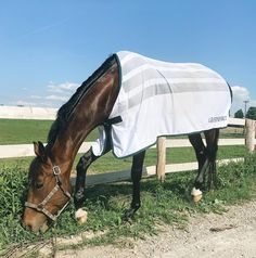 7577 Best Equestrian images in 2019 | Equestrian, Horses