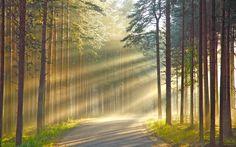 Terre/Nature Rayon De Soleil  Fond d'écran