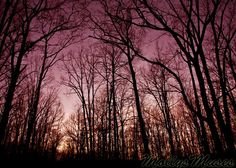 trees with burgandy background