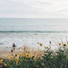 snuffair:  stylebychristie: just me you and wild flowers in... Photography Beach, Landscape Photography, Nature Photography, Camping Photography, Planer Cover, Beautiful World, Beautiful Places, Beautiful Beach, Art Beauté