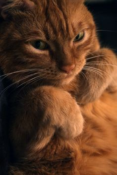 Of course I control your emotions with a flick of my paw....do my bidding!