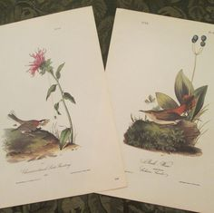 Two Vintage Bird Illustrations - Audubon Book Plates 1971