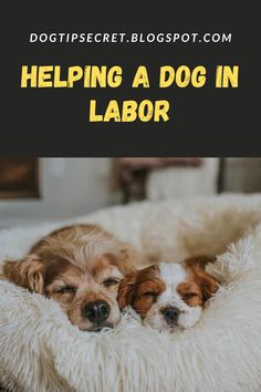 Is your dog pregnant and about to give birth? Dog Whelping Box, Whelping Puppies, Newborn Puppies, Baby Puppies, Dogs And Puppies, Dog Birth, Dog Care, Puppy Care, Hypoallergenic Dog Food