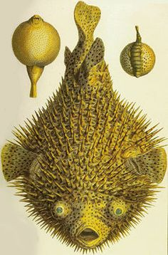 Exellent Cabinet Of Natural Curiosities Tattoo Albertus Seba And Throughout Inspiration Decorating