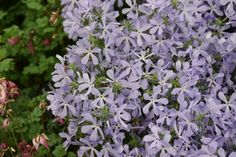 Shade gardening notes plant lists for shade gardening in winter spring summer and autumn