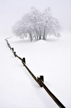 snow, winter, and tree resmi