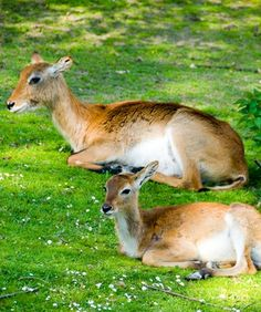 How to Keep a Deer Out of a Garden Naturally
