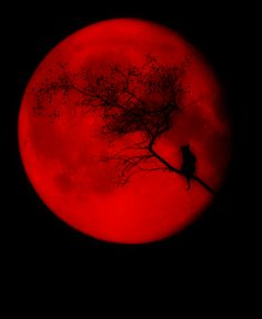 This blood red moon symbolizes both motifs of blood and the color red. The two coincide with each other suggesting murder and guilt such as when it is said that Grace sees Nancy's red eyes watching her. The Magic Faraway Tree, Shoot The Moon, Red Moon, Beautiful Moon, Blood Moon, Red Aesthetic, Art Plastique, Shades Of Red, Stars And Moon