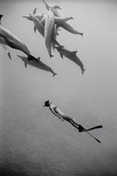 Wayne Levin Photography