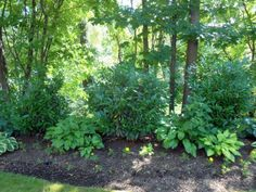 images about Deer Resistant Woodland Plantings on
