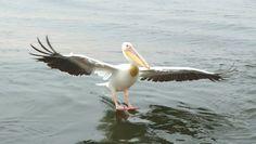 Walvisbay Animals Beautiful, Holland, God, Travel, Cutest Animals, The Nederlands, Dios, Viajes, Destinations
