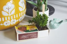 Planter une succulente dans une boîte d'allumettes Terrarium, Green Life, Decoration, Flower Power, Serving Bowls, Planter Pots, Creations, Blog, Diy