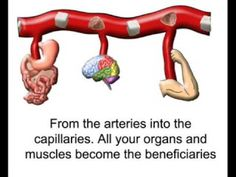 Human body rap. This rap is great for students because it explains the circulatory system in a fun way. There is lyrics on the screen so that students can join in a sing as well!