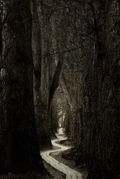 Lonely forest path. Into the woods. Dark night of the soul.