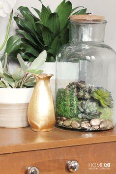 How to Make an Effort Free Terrarium