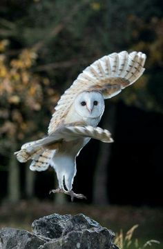 Hottest Pictures birds of prey owl Suggestions As being a wild birds of fodder photography, the most important difficulty the majority of make a complaint p Beautiful Owl, Animals Beautiful, Cute Animals, Owl Photos, Owl Pictures, Photo Animaliere, Owl Bird, Tier Fotos, Snowy Owl