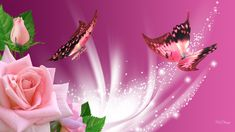 Pink Butterfly Backgrounds | Pink Butterflies Wallpaper, wallpaper, Pink Butterflies Wallpaper hd ...