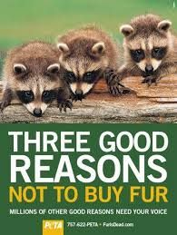 Image result for animal rights awareness