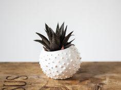 Kleine handgefertigte Keramik saftigen von OlisCupboard auf Etsy