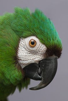 Parrot - Sever Macaw - Colorful birds