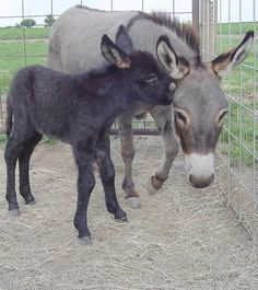 The American Donkey and Mule Society