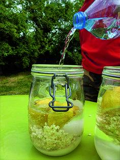 Faire une limonade maison avec des fleurs de sureau