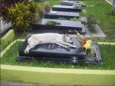 Dogs are better than any people.    For the past 6 years, a German shepherd called Capitán has slept next to the grave of his owner every night at 6pm.  His owner, Miguel Guzmán died in 2006. Capitán, the dog, disappeared while the family attended the funeral services. A week later relatives of Guzmán were visiting the cemetery when they were astounded to find the dog next to the owner's grave.  The cemetery director says that the dog comes around each night at 6pm, and has done so for the…