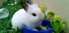 Otitis en conejos: Causas, síntomas y tratamiento