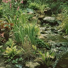 How to build a bog garden around your pond - Waterside Nursery. If you don't already have a but want to grow these plants. Bog Garden, Rain Garden, Garden Water, Water Gardens, Backyard Water Feature, Ponds Backyard, Pond Landscaping, Landscaping With Rocks, Pond Design