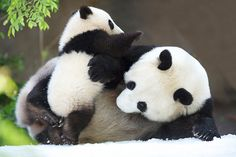Snow Day for Mr. Wu and Bai Yun