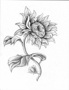This is something I wanted to try some things out I love to draw animals, flowers, and people. I am trying to get better at drawing I am getting more confident in what I am doing.More to come in the future. Thanks for the view Have a Sunflower Sketches, Sunflower Drawing, Sunflower Art, Watercolor Sunflower, Sunflower Tattoos, Sunflower Stencil, Realistic Flower Drawing, Floral Drawing, Animal Sketches