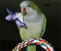 A list of bird-safe edible flowers that your bird will enjoy to nibble on.