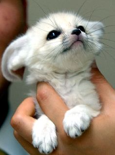 Funny pictures about Fennec Fox Smile. Oh, and cool pics about Fennec Fox Smile. Also, Fennec Fox Smile photos. Baby Animals Pictures, Cute Baby Animals, Animals And Pets, Funny Animals, Wild Animals, Baby Exotic Animals, Worlds Cutest Animals, Cute Small Animals, Jungle Animals