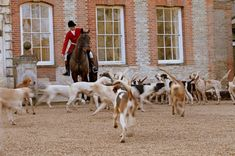 Old Berkshire Hunt visiting for a photo opportunity at Ardington House Still Photography, Sarah Wilson, Island, Film, Opportunity, House, Animals, Beautiful, Movie