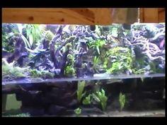 large river paludarium