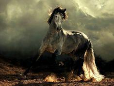 schöne-pferde-bilder-arabisches-pferd-und-einmaliger-hintergrund