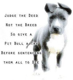 judge the deed, not the breed