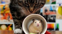Hide and Seek - cute, animals, mouse, cat