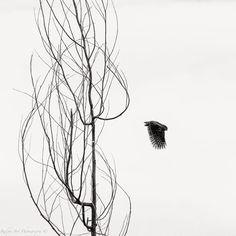 #owl #birds #blackandwhite
