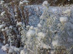 Winterwatte